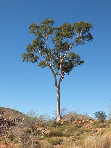 tree] (2)